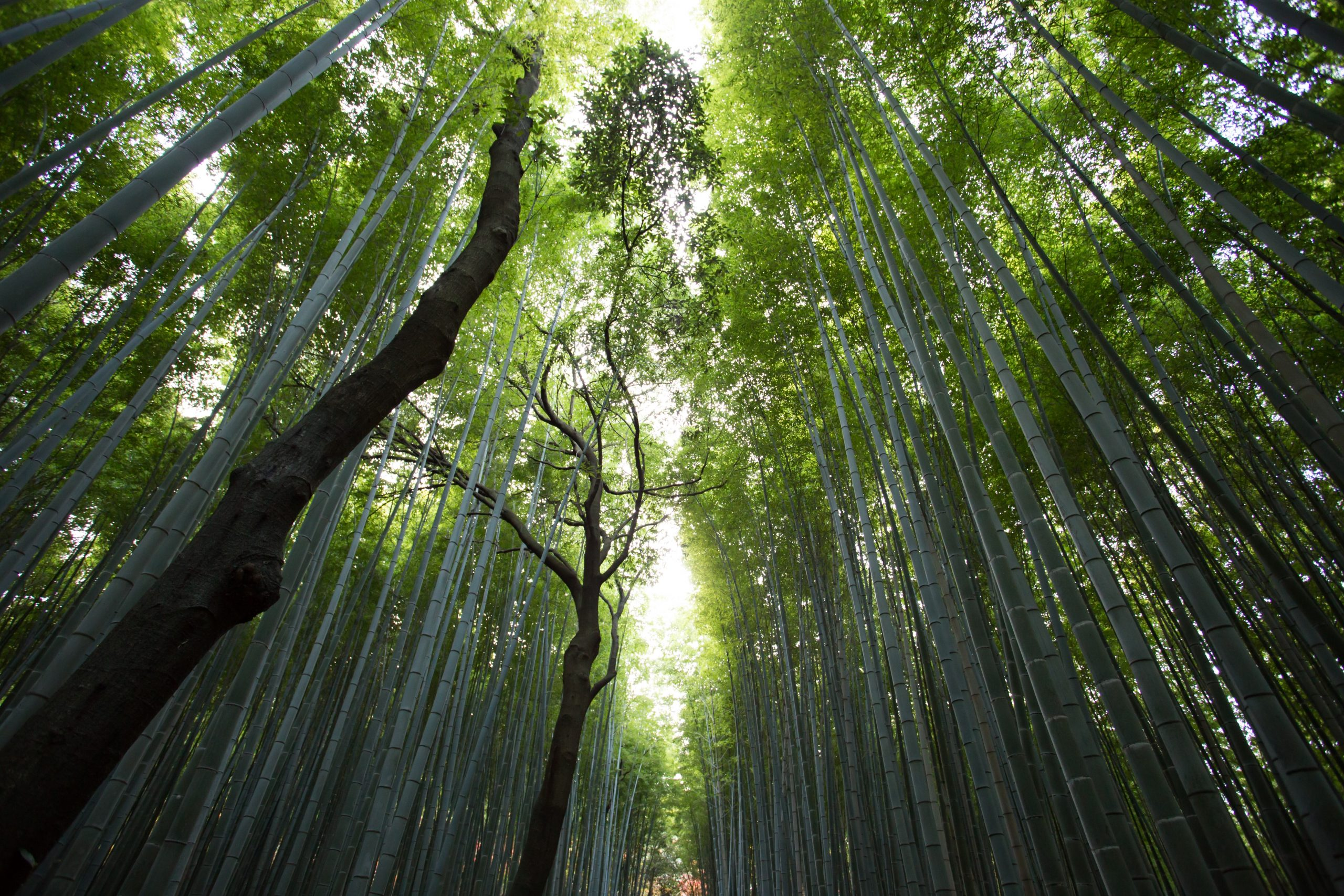 Mindfulness and Self Compassion